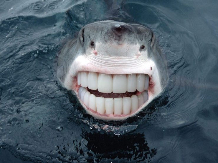 animals-with-human-teeth-9